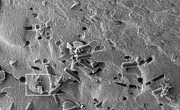 glasvezelversterkte microhybride composiet-interface