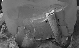 lithiumdisilicaatkroon met glasvezelstift