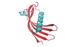 3D-beeld cystanine C
