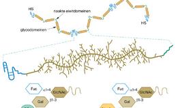 Hoog-moleculair mucine MUC5B