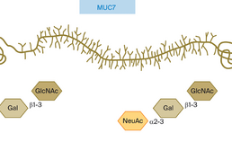 Laag-moleculair mucine MUC7