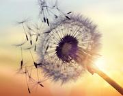 Mondzorg bij patiënten in de palliatieve levensfase – ook uw zorg?