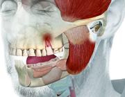 Tandheelkundige slaapgeneeskunde: nadere kennismaking met een jong vakgebied