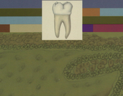 Biologie van de mond