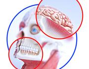 Denk aan je tanden - de relatie tussen kauwen encognitie