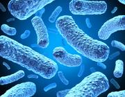 Serie: Medicamenten en mondzorg. Is er nog indicatie voor bacteriologisch onderzoek bij parodontitis?