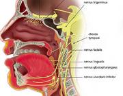 Oral medicine 3. Anatomie, fysiologie en diagnostische overwegingen bij smaak- en reukstoornissen