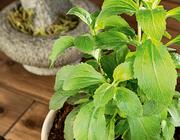 Stevia in de strijd tegen cariës
