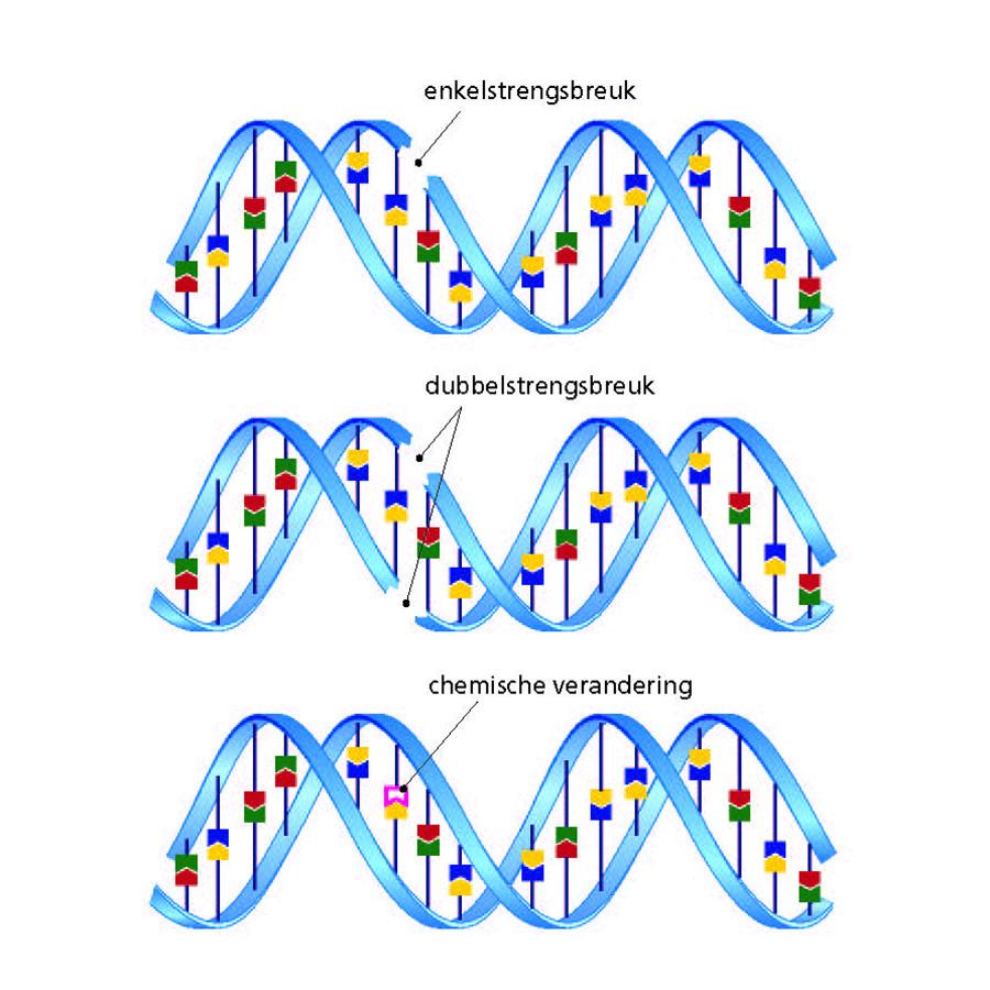Afb. 3. Verschillende soorten DNA-schade.