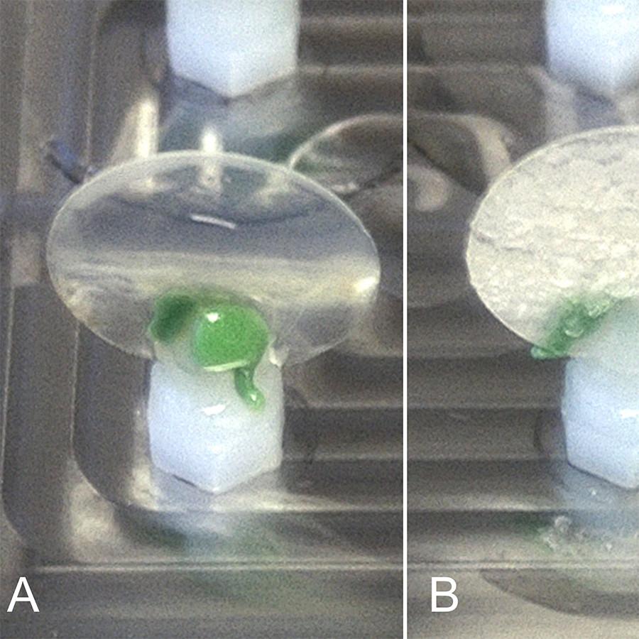 Afb. 2. Ronde dekglazen gefixeerd met groene siliconen afdrukmateriaal
